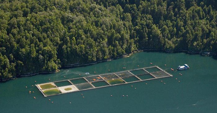 ADCPs contribute to improving Chile's aquaculture industry