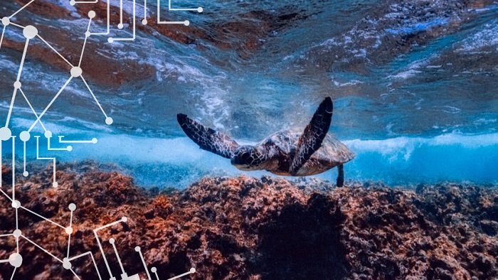 limpieza submarina Mariscope